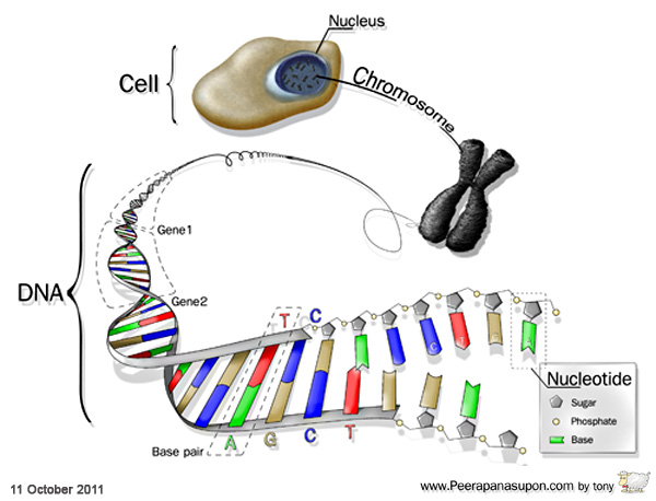 DNA-Level-for-website